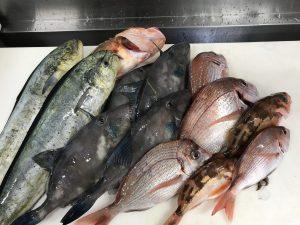 2017年08月28日にOが釣ったシイラとウマヅラなどの大群